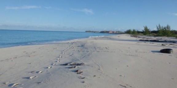 Beach Front in South Bimini
